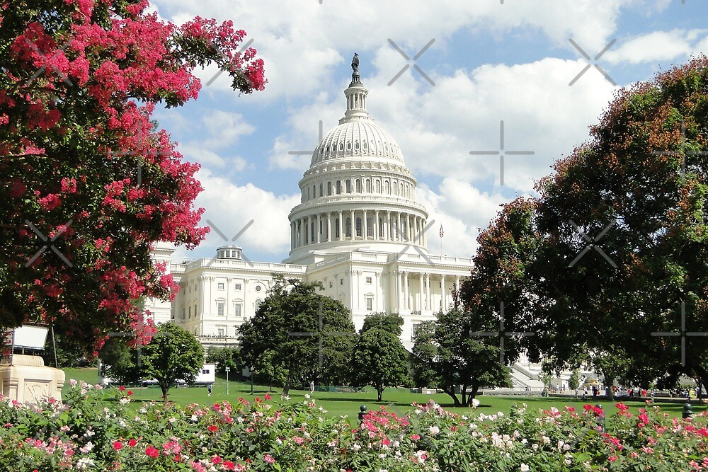Capitol Blooms by Barrie Woodward