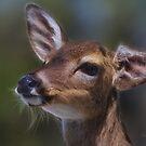 Key Deer by Deborah  Benoit