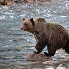 Grizzly River by James Anderson
