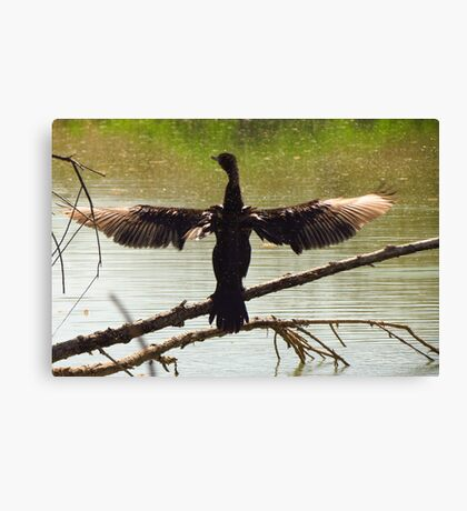 Neotropic Cormorant ~ Drying Off Canvas Print