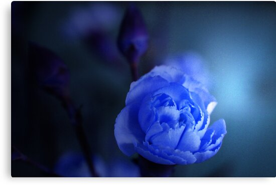 SO BLUE by leonie7