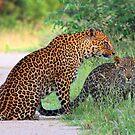 Leopard affection! by jozi1