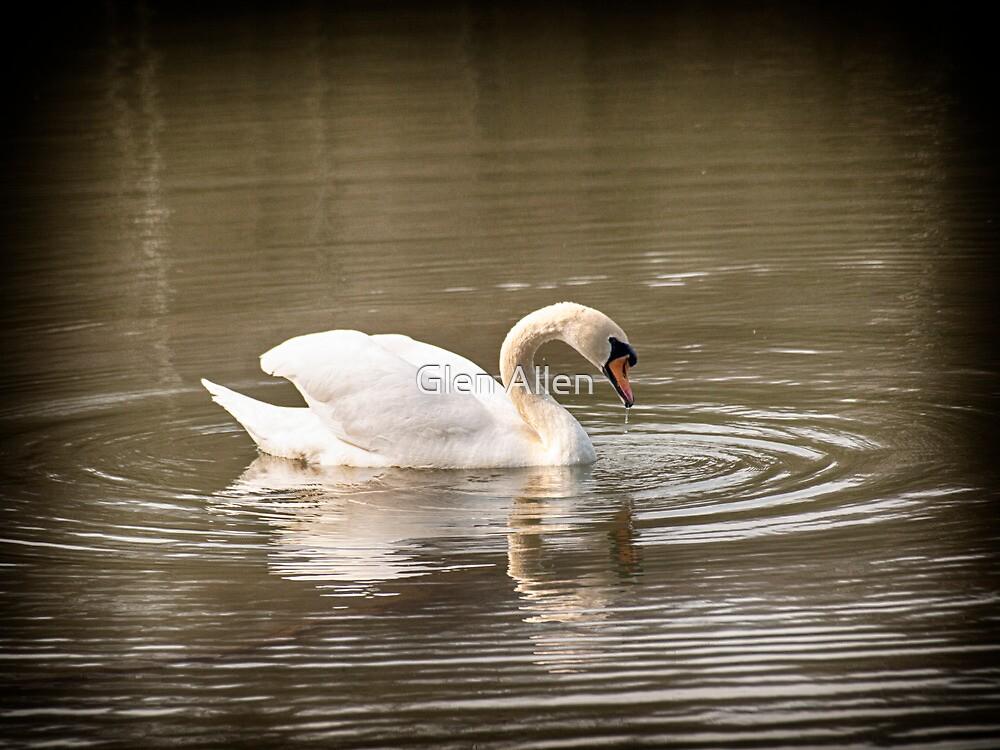 Vignette Swan  by Glen Allen