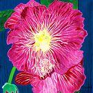 Pink Flower by Barbara  Strand