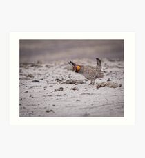 Prairie Chicken 2013-4 Art Print