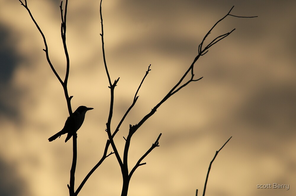 Perched by scott Berry