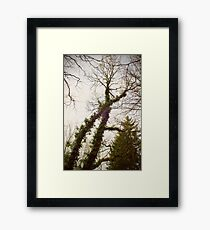 X-tree Framed Print