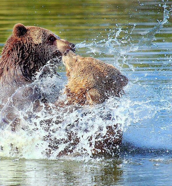 The bear necessities by Alan Mattison