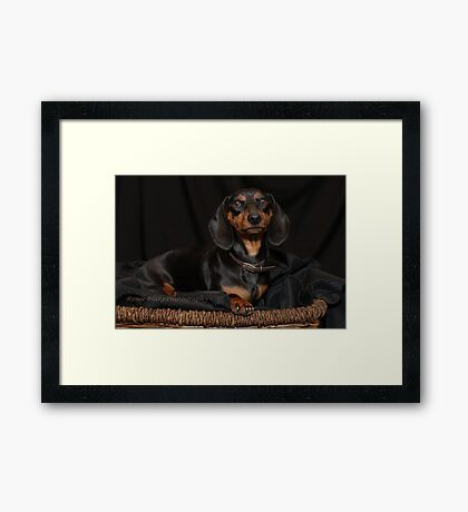 Queen Of The House ~ Framed Print