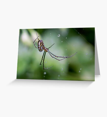 Spiders have jewels on their legs Greeting Card