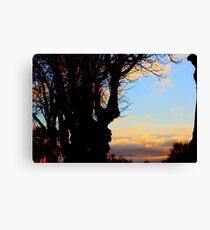 A Beautiful sunset across  Trees Canvas Print
