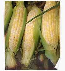 Ears of Corn Poster