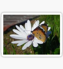 White Daisy and Butterfly Sticker