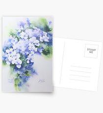 Hydrangea - 2 Postcards