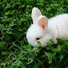Cute Bunny by Guatemwc