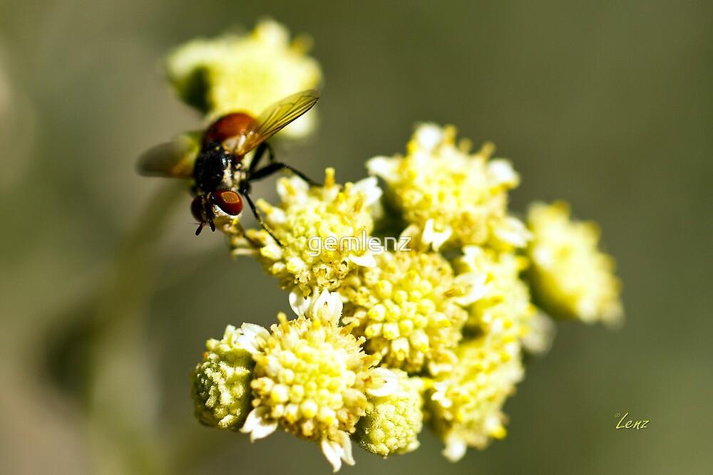 Bee in Flower by George Lenz