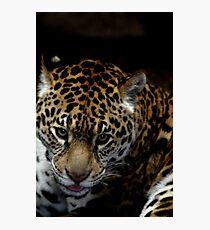Jaguar Photographic Print