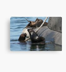 Sea Lions fun by the old submarine!!! Metal Print