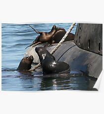 Sea Lions fun by the old submarine!!! Poster
