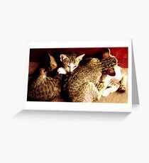 kittens in indonesia Greeting Card