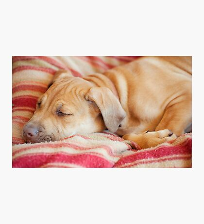 Let sleeping dogs lie.... Photographic Print