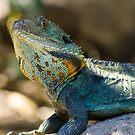 Lazy Lizard by BeccaS