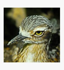 Bush Thick Knee Profile Photographic Print