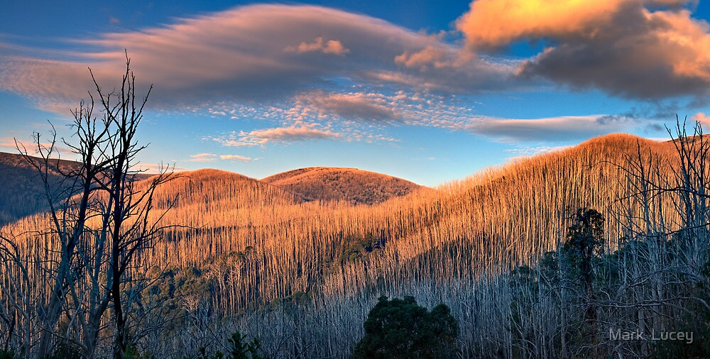 The Burnt Forest by Mark  Lucey