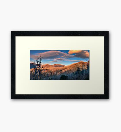 The Burnt Forest Framed Print