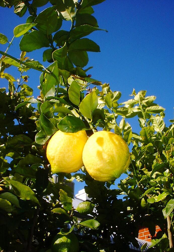 Two Lemons by Robert Phillips