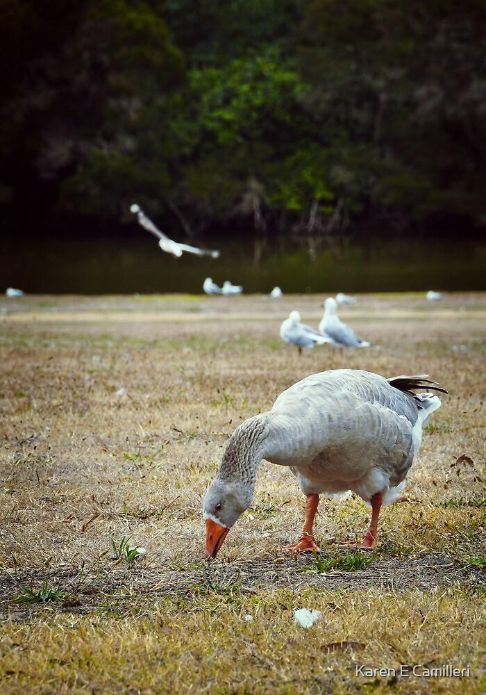 Goose & Co. by Karen E Camilleri