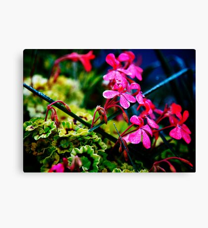 Blue and Green with Pink between Canvas Print