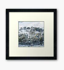 Forest after snowstorm Framed Print