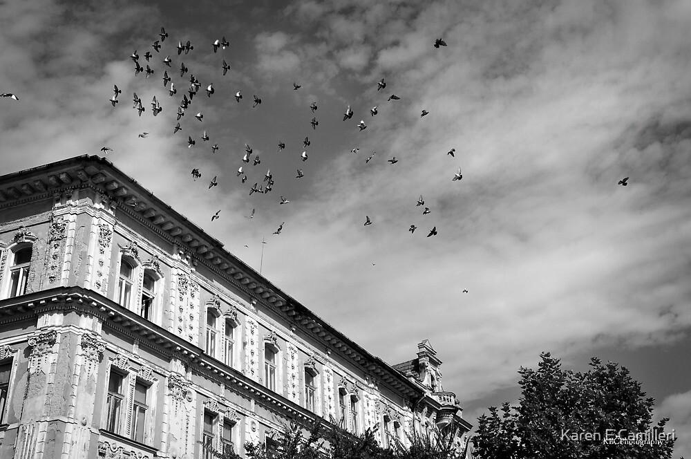 birds flying over by Karen E Camilleri