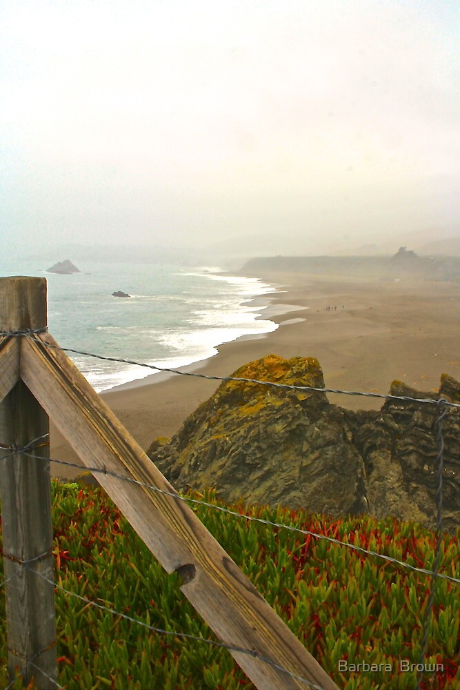 Beach Overlook by Barbara  Brown
