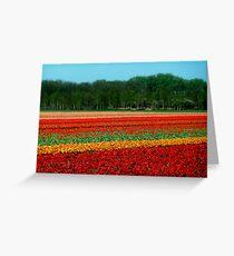 Tulip Field. Greeting Card