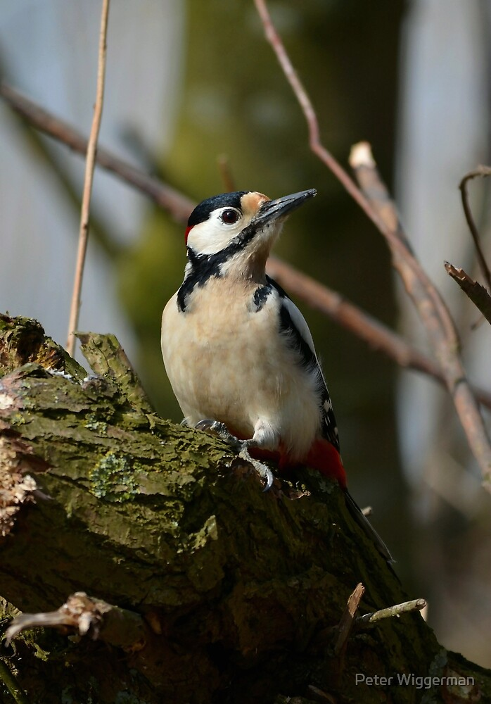 Great Spotted Woodpecker by Peter Wiggerman