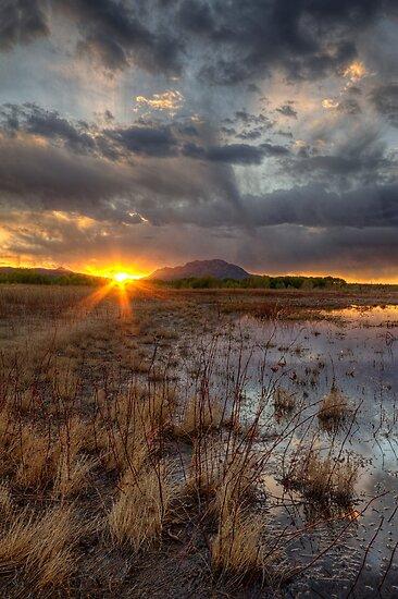 Elements of Sunset 2 by Bob Larson