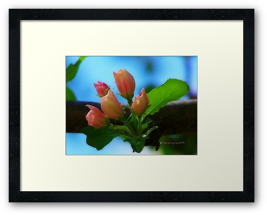 Little Crabapple Buds by Lisa Taylor