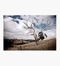 Greendale Australia Photographic Print