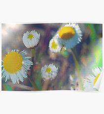 Crystal daisies Poster