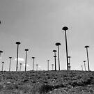 Stork nests  by ZASPHOTOS