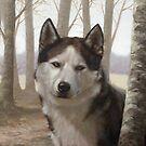 Siberian Husky by johnartist