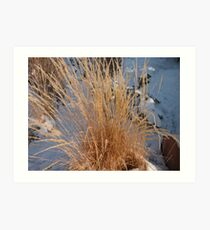 Sagebrush Art Print