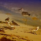 Private Beach For The Birds by Deborah  Benoit