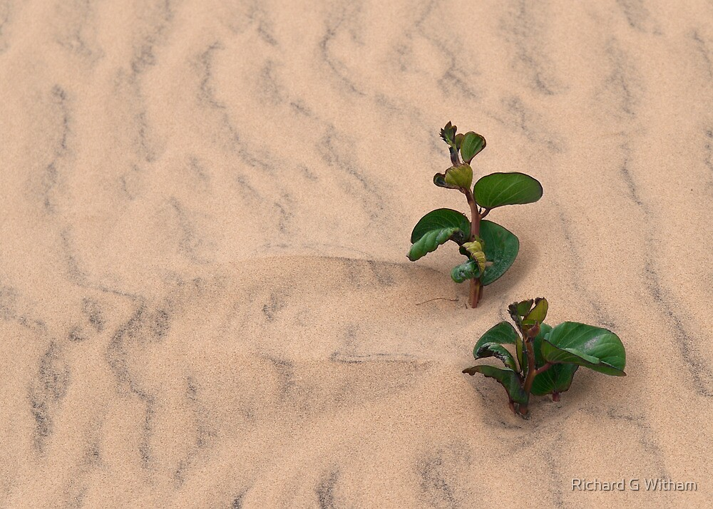 Rippled Sand Greeting Card by Richard G Witham