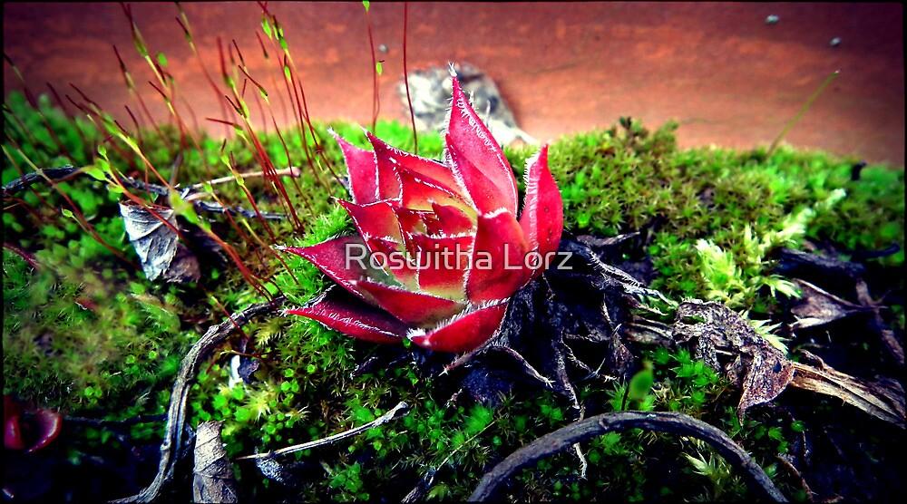 Succulenten by RosiLorz
