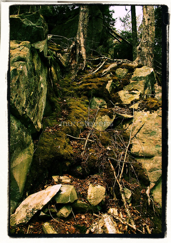 Rock, Moss and Root by murrstevens