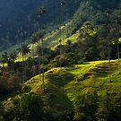 Salentian Paradise by Thomas Dawson