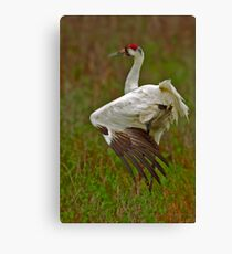 Stretching Whooping Crane Canvas Print